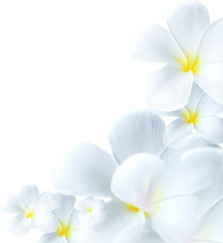 flower1602
